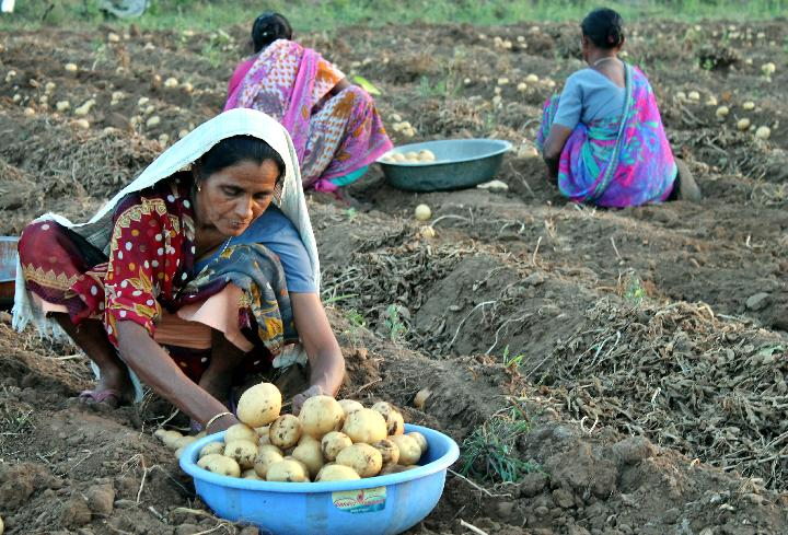 Women farmers at work in Gujarat